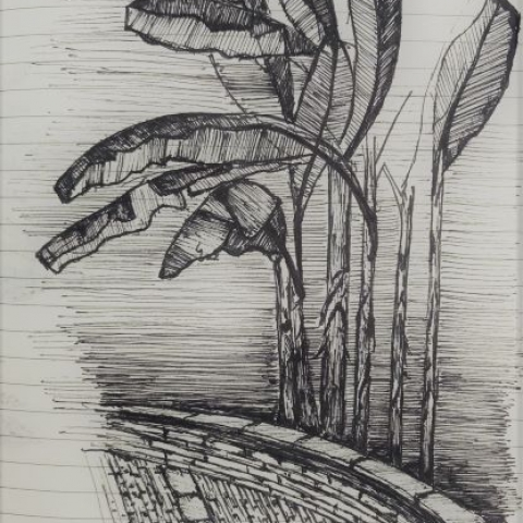 pentekeningen palmen door Martijn Kuijs